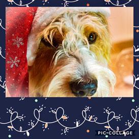 Jenaro wünscht frohe Weihnachten