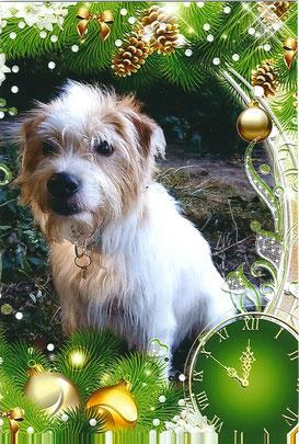 Badou wünscht frohe Weihnachten