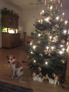 Aragon wünscht Frohe Weihnachten