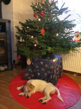 Domino - Elmo wünscht Frohe Weihnachten
