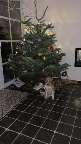 Nita sendet Weihnachtsgrüße