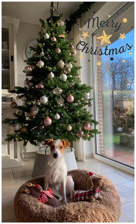 Weihnachtsgrüße von Legra
