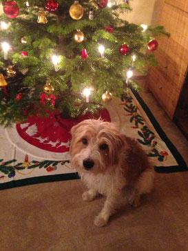 Gianni sendet Weihnachtsgrüße