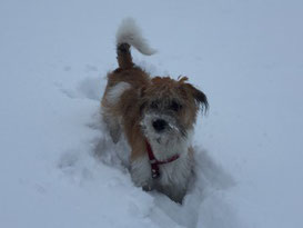 Bolle liebt Schnee