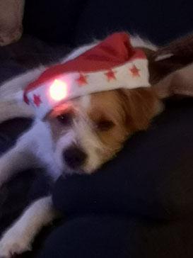 Weihnachtsgrüße von Luis