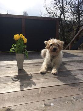 Enno - Enrique - genießt den Frühling