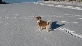 Bastiano genießt den Winter