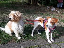 Elba und Legra