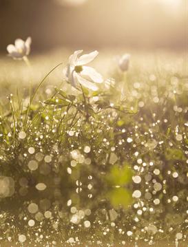 Blumen im Morgentau