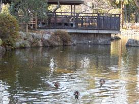 東京競馬場,日本庭園