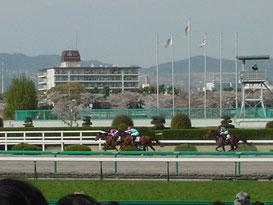 阪神レースコース概要
