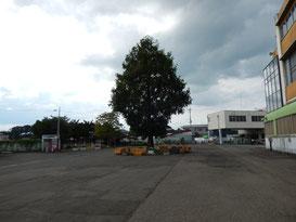 水沢競馬場,場内散歩その1,トップ画像