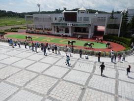 盛岡競馬場,場内散歩トップ画像,パドック