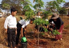 子どもたちと一緒に木に水やりをするスオン先生