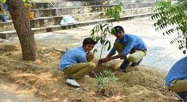 マンゴーの苗木を大事に育てていくと約束しました