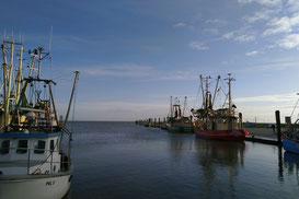 Kutter am alten Hafen von Pellworm. Bild: Silke Wissel/LKN.SH
