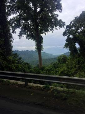Dschungel, Affen, Lombok