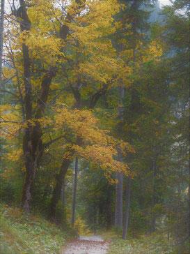 Herbstweg. Foto: Maiken Winter