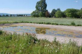 Naturerlebnis Rheinauen NABU