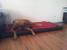 Bezug Kunstleder Maßanfertigung passend für ein vorhandenes Hundekissen
