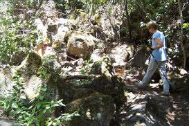 Wandern im Wald mit Hund fördert das gesamte Immunsystem und schult das Gleichgewicht.