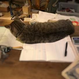 ノートに寝そべるちーちゃん