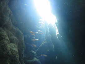 石垣島 ダイビング 菜ちゃんのページ