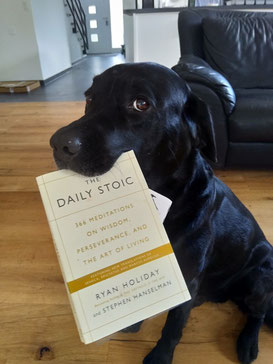 Indy doesn't actually need this book—he seems to have this whole Stoic philosophy figured out already—but he's willing to model in exchange for three dog treats.