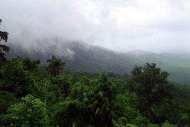 Regenwald - wichtigster Klimaregulator