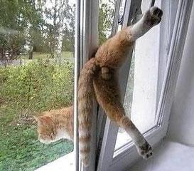 Gut gemocht Warum ist es so wichtig Fenster und Balkone katzensicher zu machen KF43