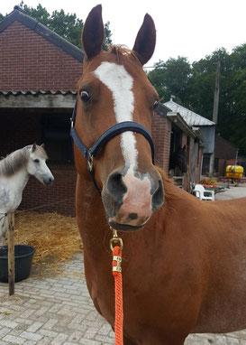 Grondwerkles voor sensibele paarden