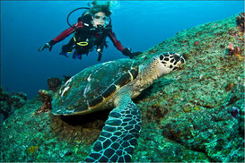 Make a grandiose diving tour to Koh Tao during your Thailand holiday.