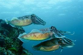 Entdecken Sie im Urlaub die Unterwasserwelt bei einer Schnorcheltour zu den Similan Islands.