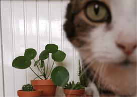 Foto © Sifu, kattenbeest van schoonzus