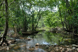 Rivière en Haute Guinée