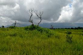 Au loin, les monts Nimba