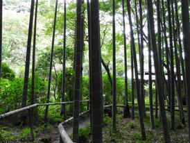 竹林遊歩道