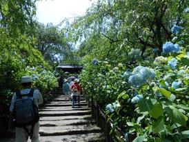 山門への小道