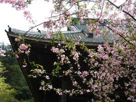 祖師堂の屋根と花海棠