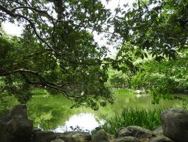 正参道左の神池