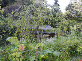 庭園から白蓮舎