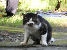 円覚寺境内の猫