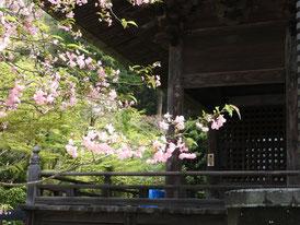 回廊にかかる花海棠