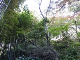 境内から竹林へ