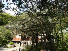 庭園から見る本堂
