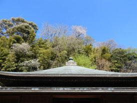本堂(泰平殿)の屋根