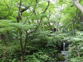 旧東慶寺仏殿下の滝