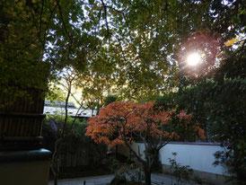 竹の庭への入り口