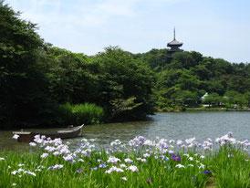 花菖蒲と大池
