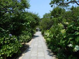 境内、春の草花に覆われた参道